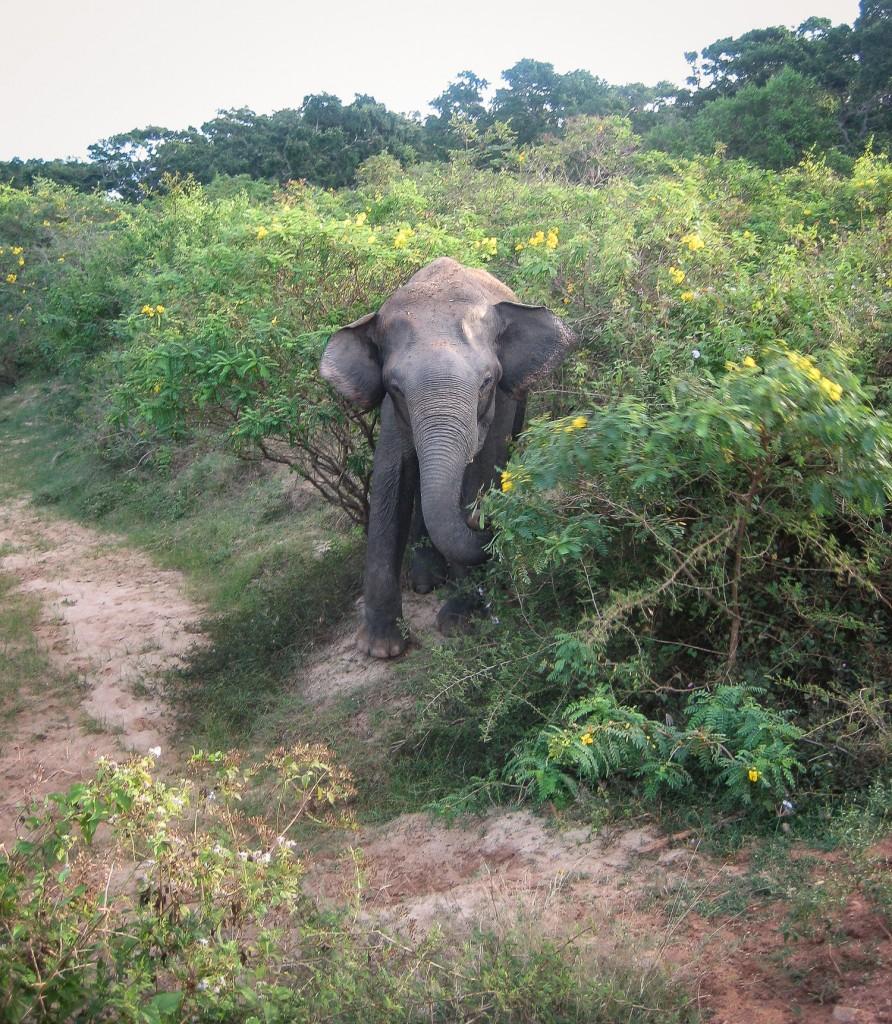 Plötzlich tauschte ein Elefant aus dem Busch auf und stand direkt vor uns.