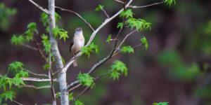 bird-138